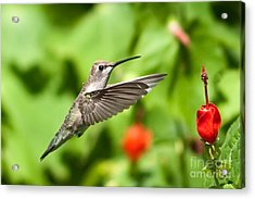 Pause In Motion Acrylic Print by Charles Dobbs