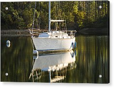 Acrylic Print featuring the photograph Pause by Randy Wood