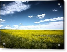Acrylic Print featuring the photograph Pawnee Grasslands by Shane Bechler