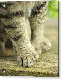Paws For Thought Acrylic Print by Marilyn Wilson