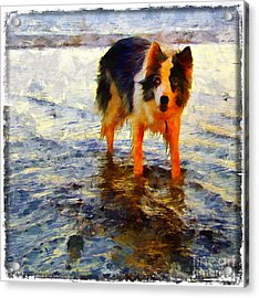 Paws For Thought Acrylic Print