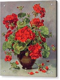 Geranium In An Earthenware Vase Acrylic Print by Albert Williams
