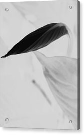 Peace Lily  Acrylic Print by Tara Miller