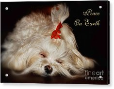 Peace On Earth Acrylic Print