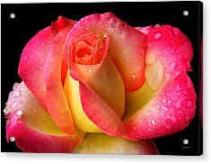 Peace Rose 001 Acrylic Print by George Bostian