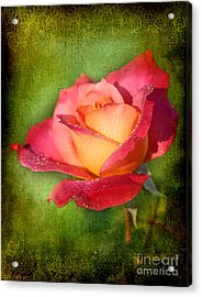 Peace Rose Acrylic Print by Joan McCool