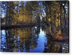 Peaceful Cedar Acrylic Print by Greg Vizzi
