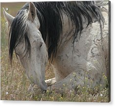 Peaceful Acrylic Print