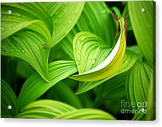 Peaceful Green Acrylic Print by Cynthia Lagoudakis