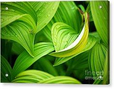 Peaceful Green Acrylic Print by Cynthia Lagoudakis