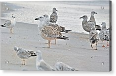 Peaceful Gulls Acrylic Print by Betsy Knapp