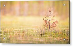 Peaceful Acrylic Print by Janne Mankinen