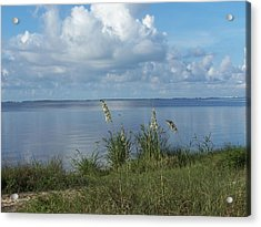 Acrylic Print featuring the photograph Peaceful by Michele Kaiser