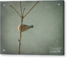 Peaceful Perch Acrylic Print