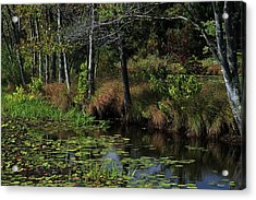 Peaceful Pond Acrylic Print by Karol Livote