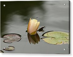 Peaceful Pond Acrylic Print