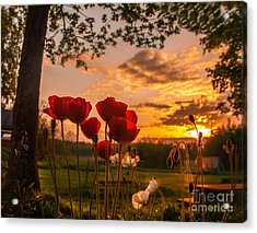 Peaceful Poppy Acrylic Print
