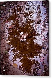Peaceful Reflections Acrylic Print by Brian Gibson