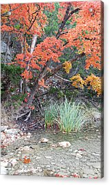 Peaceful Retreat Lost Maples Texas Hill Country Acrylic Print by Silvio Ligutti