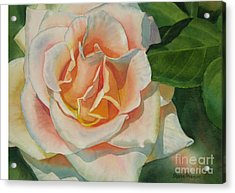 Peach And Gold Colored Rose Acrylic Print by Sharon Freeman