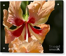 Peach And Red Flower Acrylic Print