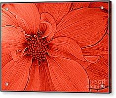Peach Blossom Acrylic Print by Dora Sofia Caputo Photographic Design and Fine Art