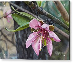 Peach Blossom Acrylic Print by Joshua Martin