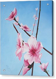 Peach Blossoms Acrylic Print by Mary Rogers