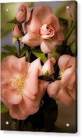 Peach Floribunda Roses Acrylic Print by Julie Palencia