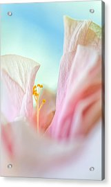 Peach Hibiscus. Macro Acrylic Print by Jenny Rainbow
