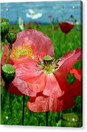Peach Poppy Pods Acrylic Print