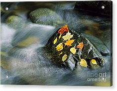 Acrylic Print featuring the photograph Peacham Brook In Fall by Alan L Graham