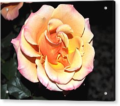 Peaches And Cream With A Dolop Of Lemon Acrylic Print