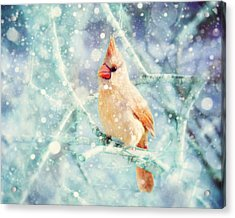 Peaches In The Snow Acrylic Print