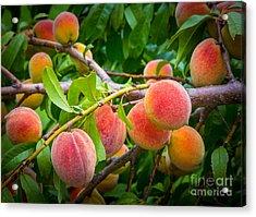 Peaches Acrylic Print by Inge Johnsson