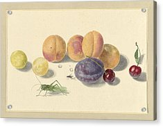 Peaches, Plums, Cherries And Two Insects Acrylic Print
