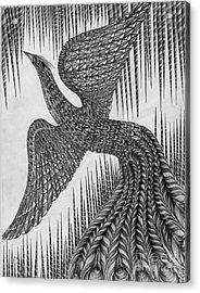 Peacock Acrylic Print by Anca S