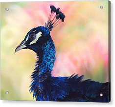 Peacock And Pink Acrylic Print by DerekTXFactor Creative