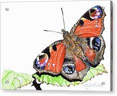 Peacock Butterfly Acrylic Print by Katy Scott Ricketts