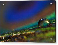 Peacock Drop Acrylic Print by Lisa Knechtel