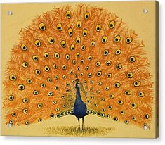 Peacock Acrylic Print by English School