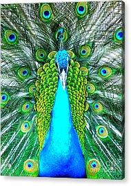 Peacock Face On Acrylic Print by Heidi Manly