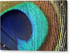 Peacock Feather Abstract Acrylic Print by Nigel Downer