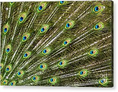 Peacock Feather Abstract Pattern Acrylic Print by Darleen Stry