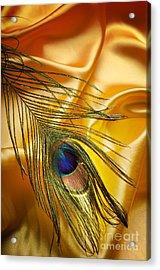 Peacock Feather Acrylic Print by Jelena Jovanovic