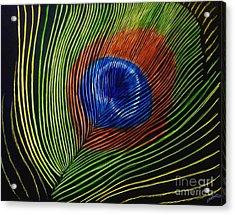 Peacock Feather Acrylic Print by Jennifer Jeffris
