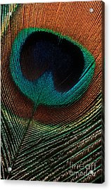 Acrylic Print featuring the photograph Peacock Feather by Jerry Fornarotto