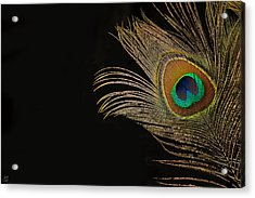 Acrylic Print featuring the photograph Peacock Feather Still Life by Lisa Knechtel