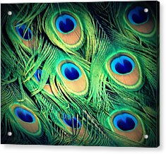 Acrylic Print featuring the photograph Peacock Feathers by David Mckinney