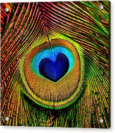 Peacock Feathers Eye Of Love Acrylic Print